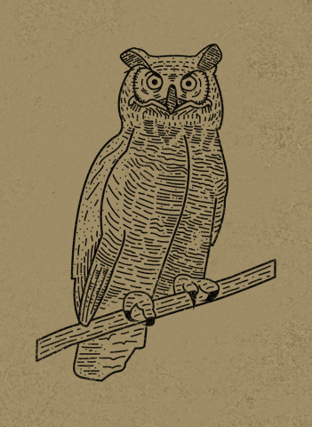sam broom owl illustration graphic design lines eyes